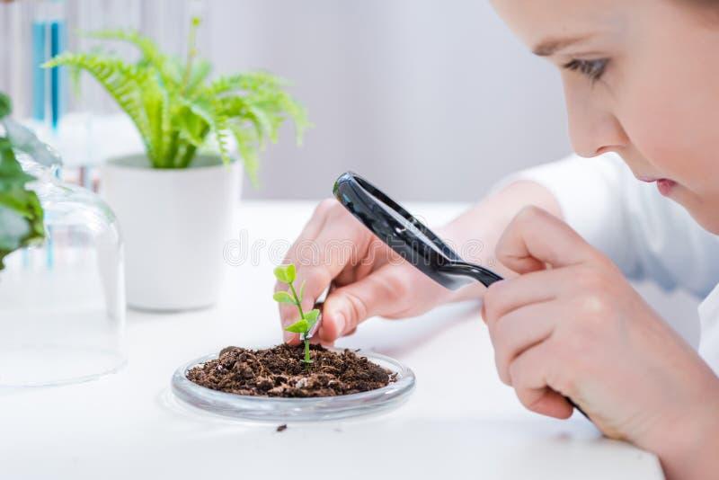 有放大镜的小女孩审查绿色植物的在实验室 免版税库存图片