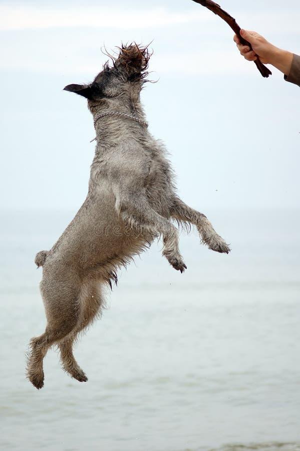 有效的狗 免版税库存图片