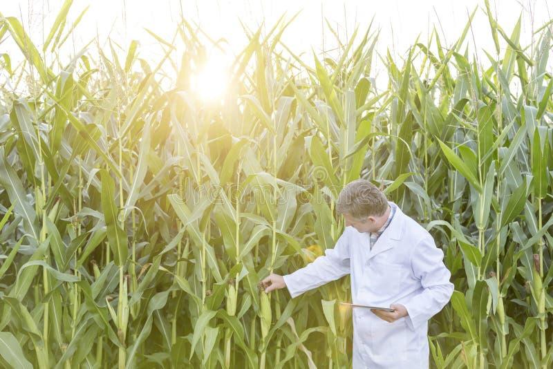 有数字片剂审查的棒子的科学家在农场 库存图片