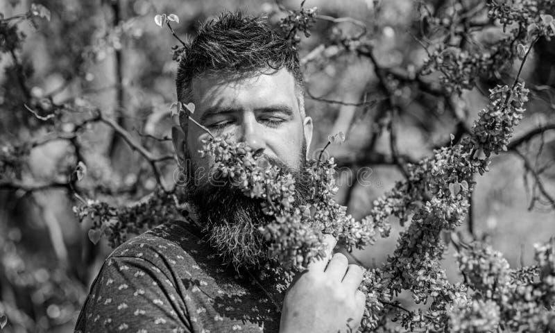 有新理发的有胡子的人嗅南欧紫荆树绽放  宁静概念 有胡子的在平安的人和髭 免版税库存照片