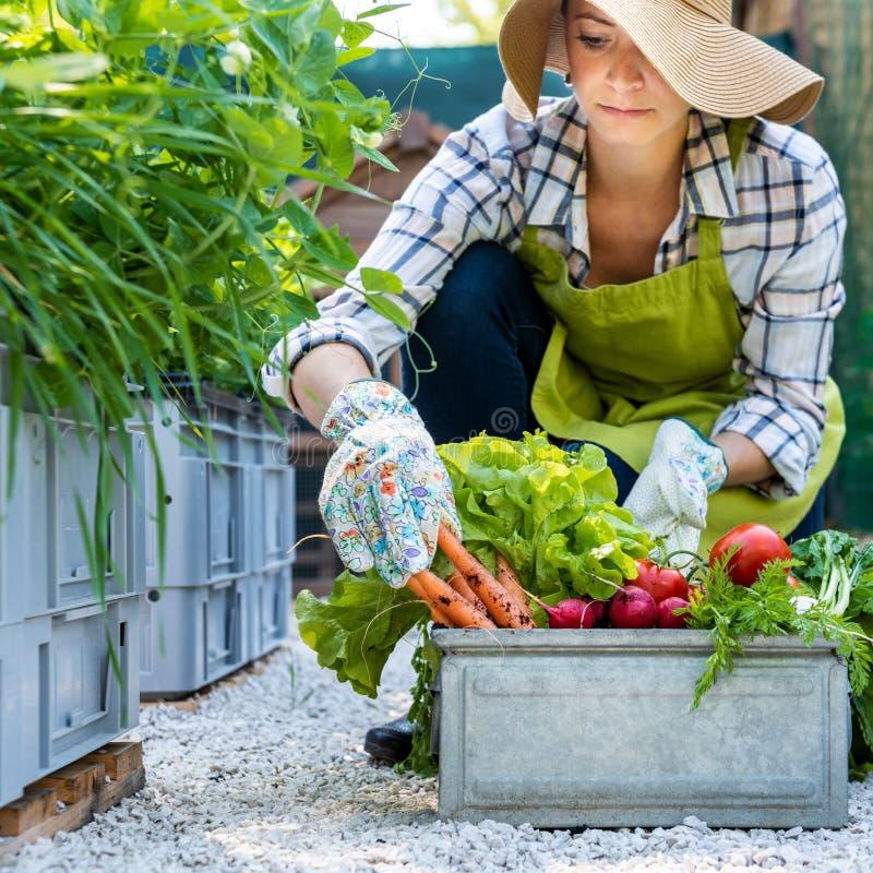 有新近地被收获的菜的美丽的年轻女性农夫在她的庭院里 本地出产的生物产物概念 免版税库存图片
