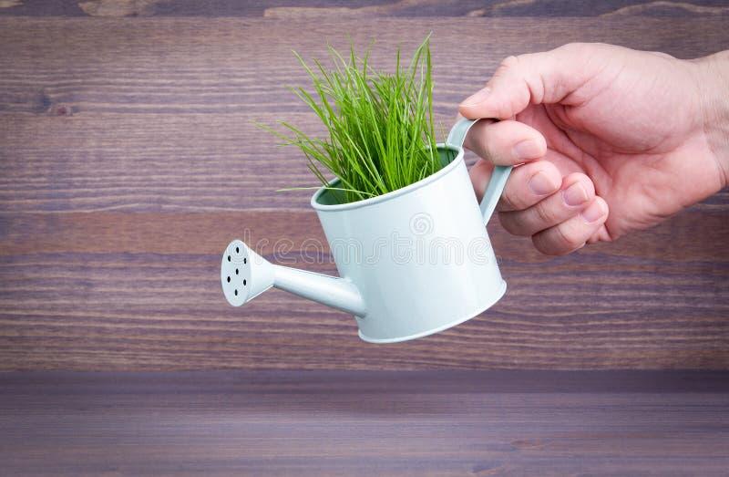 有新鲜的绿色春天草的微型喷壶 事务和发展的抽象背景 库存照片