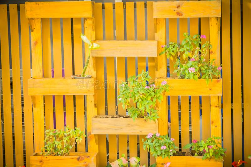 有方形的装饰花盆的美丽的木垂直的庭院墙壁在垂直的样式 有小fl的装饰的垂直的庭院 免版税库存照片