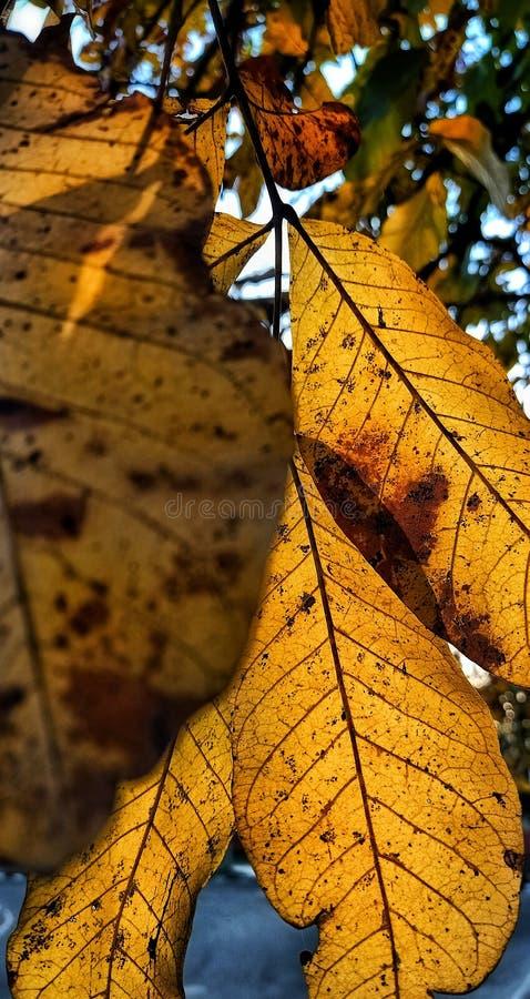 有明亮的天空的黄色叶子在背景中 库存照片