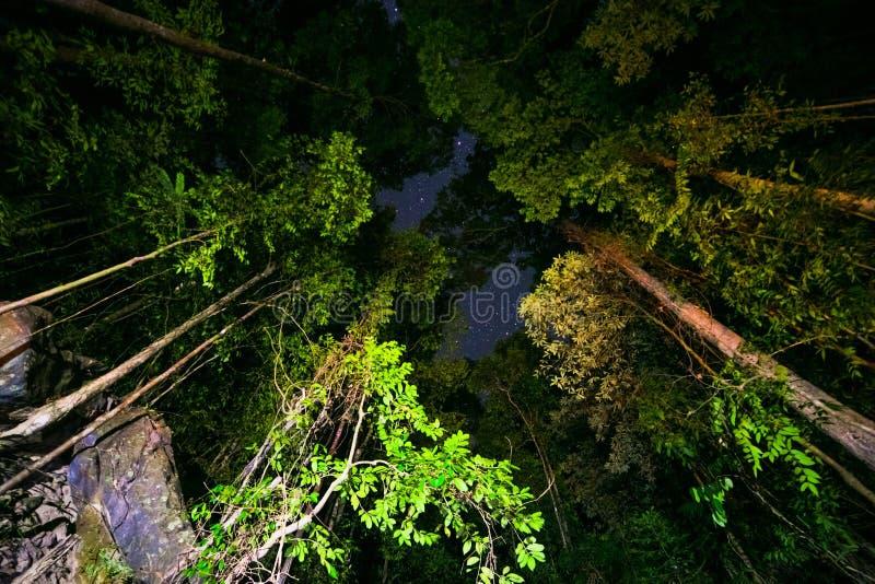 有星的夜森林 库存照片