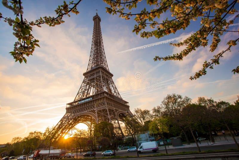 有春天树的艾菲尔铁塔在巴黎,法国 免版税库存照片