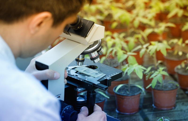 有显微镜的科学家在温室里 免版税库存图片