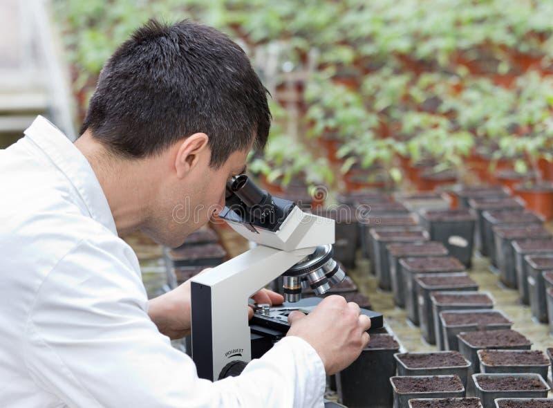 有显微镜的科学家在温室里 免版税库存照片