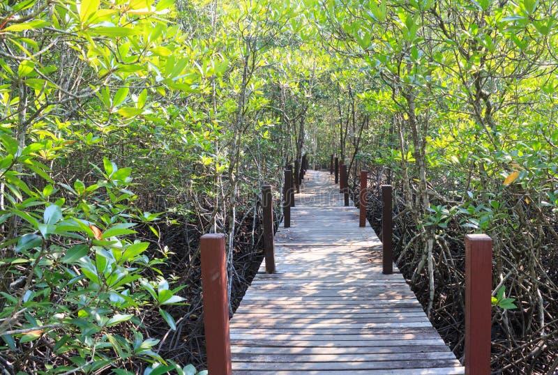 有木桥的美洲红树森林 免版税库存照片