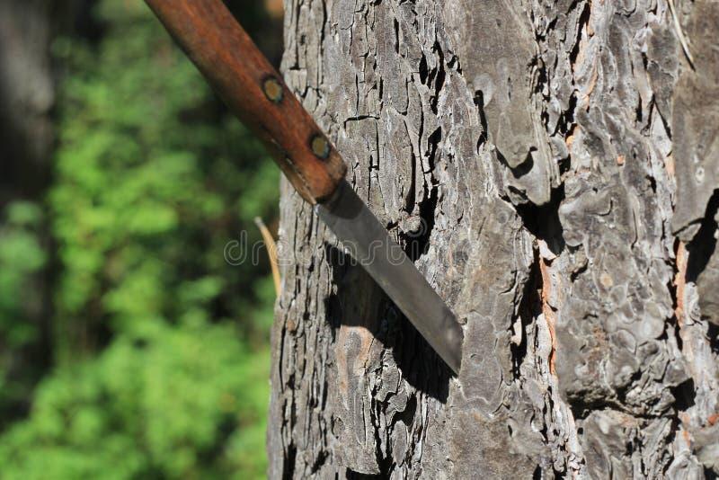 有木的刀子 库存图片