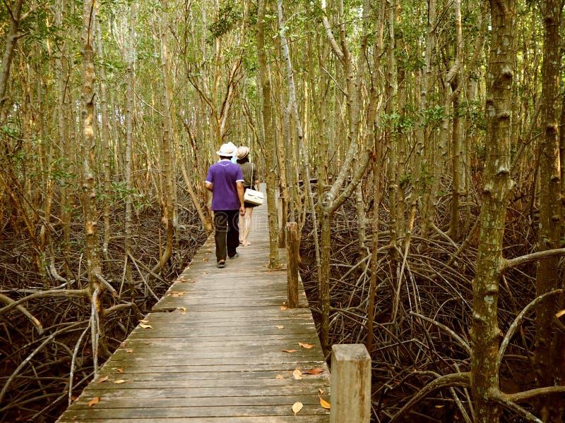 有木的走道在金黄草甸橛,泰国 免版税图库摄影