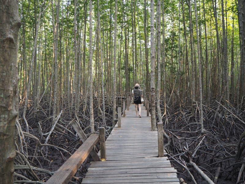 有木的走道在金黄草甸橛,泰国 库存图片