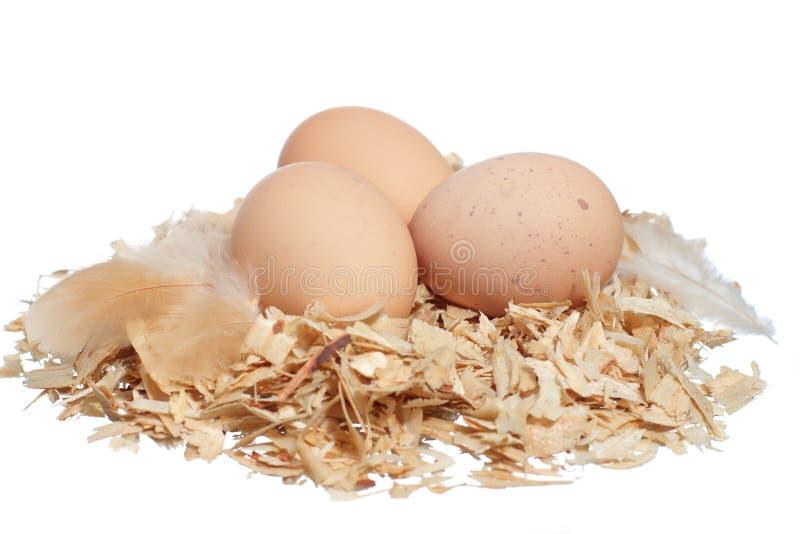 有机农厂新鲜的鸡蛋 库存图片