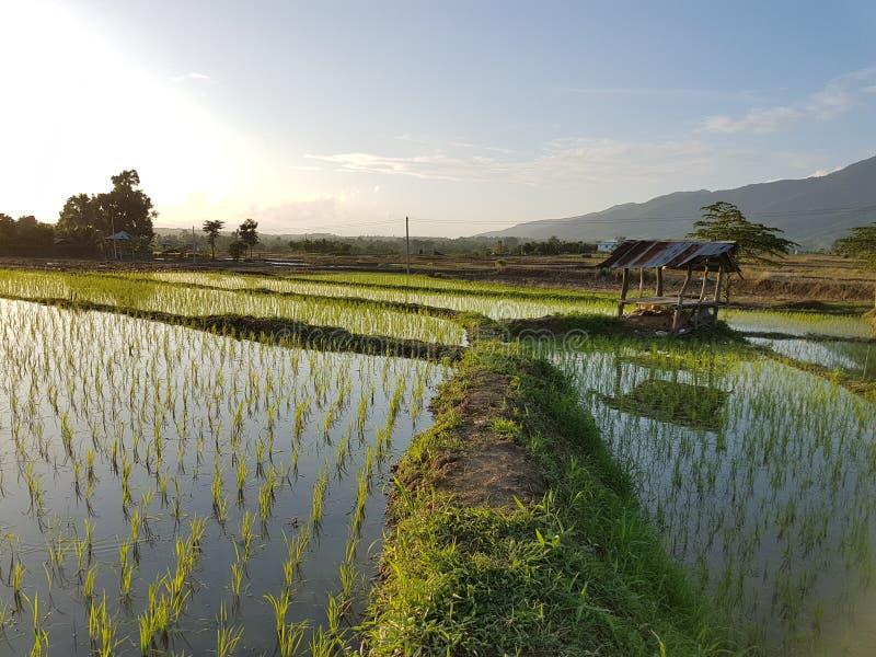 有机农场在泰国 免版税库存照片