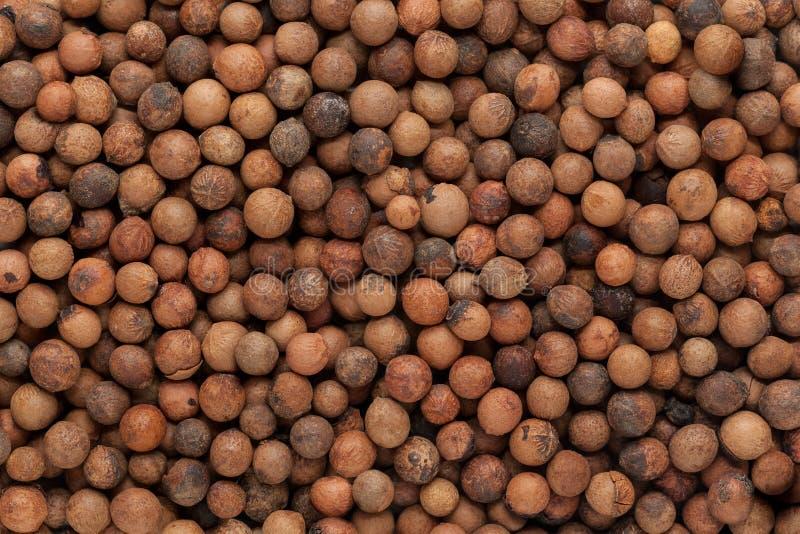 有机印地安檀香木(檀香属册页)种子 免版税库存照片