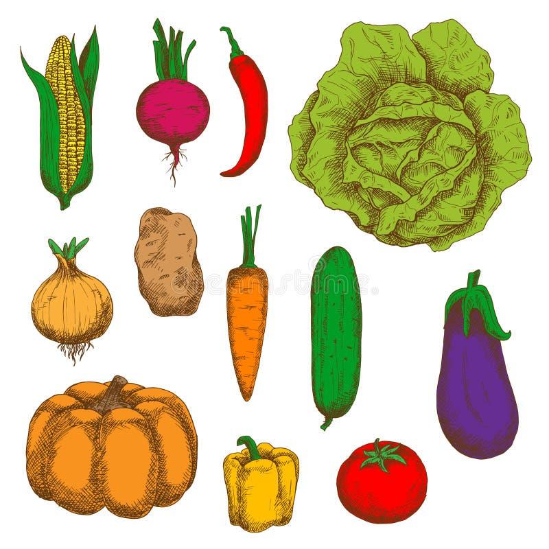 有机增长的菜五颜六色的剪影 皇族释放例证