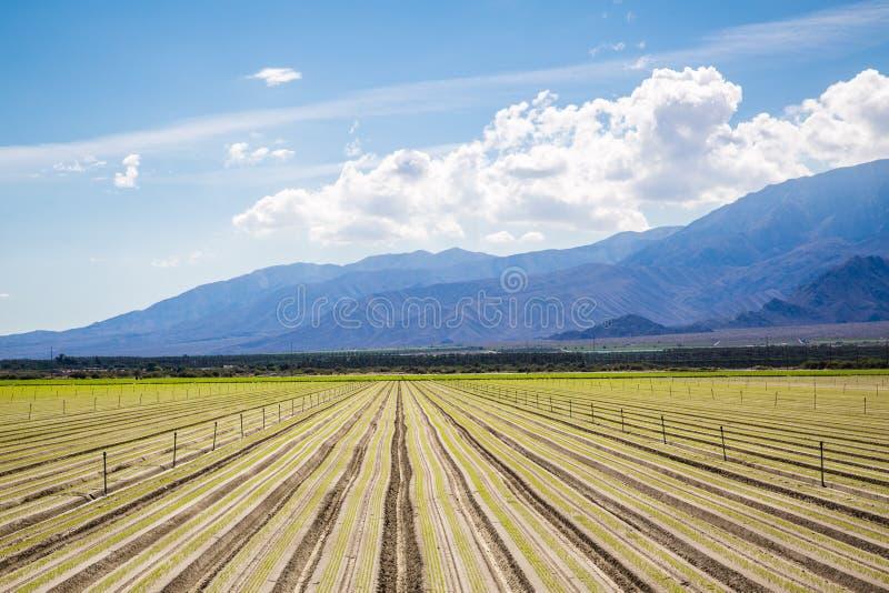 有机庄稼的肥沃农业领域在加利福尼亚 免版税图库摄影