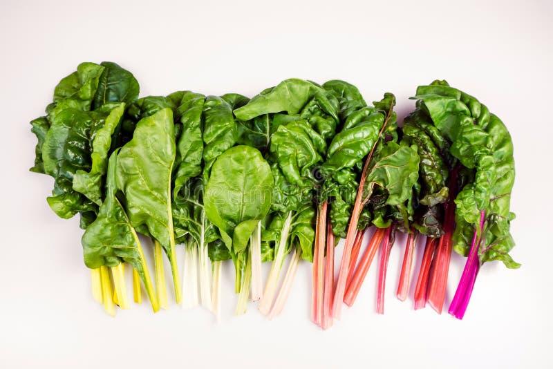 有机彩虹唐莴苣食物梯度:浪花自由的叶茂盛绿色 免版税库存照片
