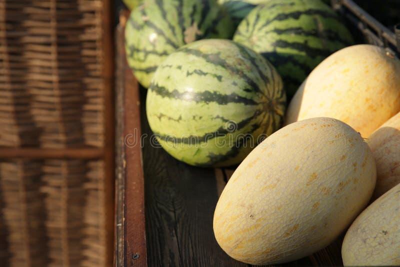 有机新鲜的西瓜和瓜在显示在市场上 库存图片