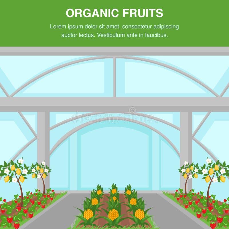 有机果子室内耕种海报模板 皇族释放例证
