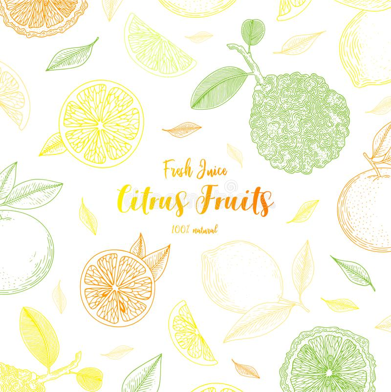 有机柑桔横幅 健康的食物 板刻剪影葡萄酒样式 设计菜单的,食谱素食食物 皇族释放例证