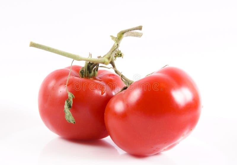 有机物蕃茄 库存照片