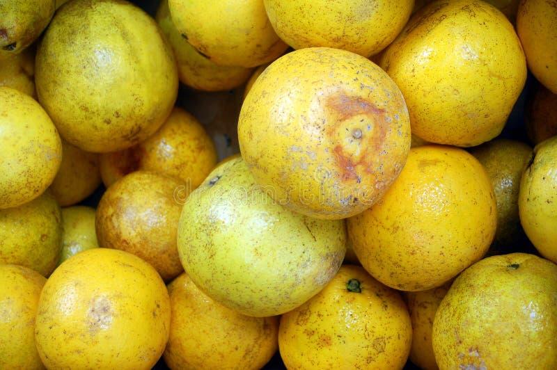 有机的葡萄柚 免版税库存图片