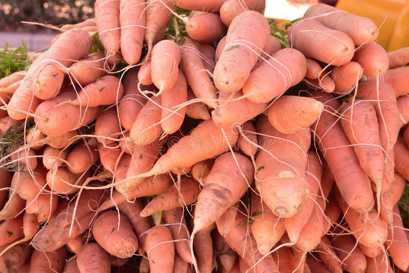 有机红萝卜,短小和粗短在地方农夫的市场,没有杀虫剂上 库存图片