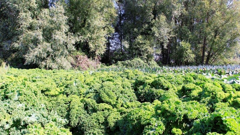有机耕田混杂的菜园 免版税库存图片