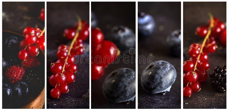 有机莓、蓝莓和红色莓果 免版税库存图片
