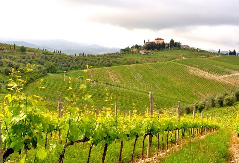 有机葡萄园在托斯卡纳,意大利 免版税图库摄影