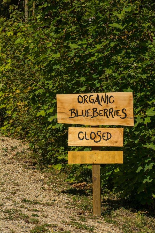 有机蓝莓标志 免版税库存照片