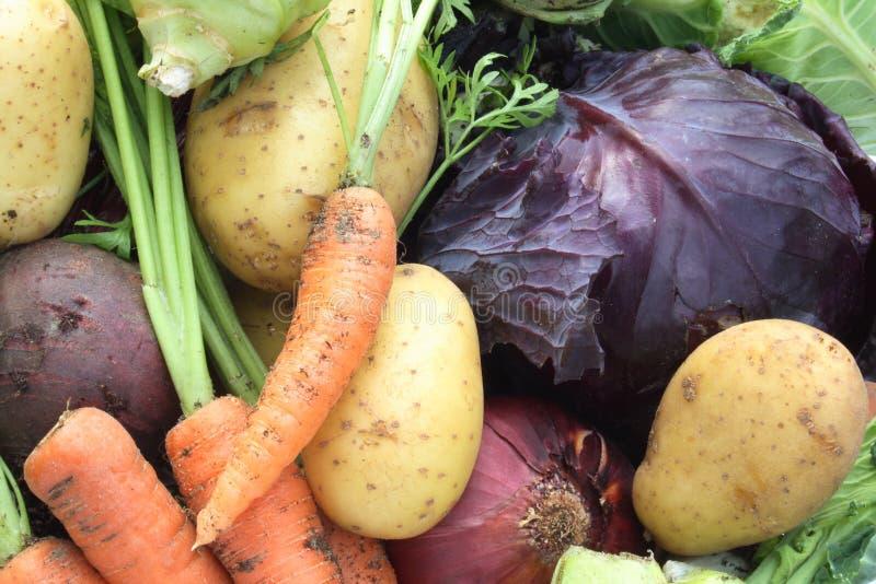 有机蔬菜 免版税库存图片