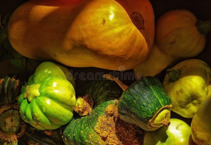 有机金瓜Basketfull从秋天收获的 库存图片