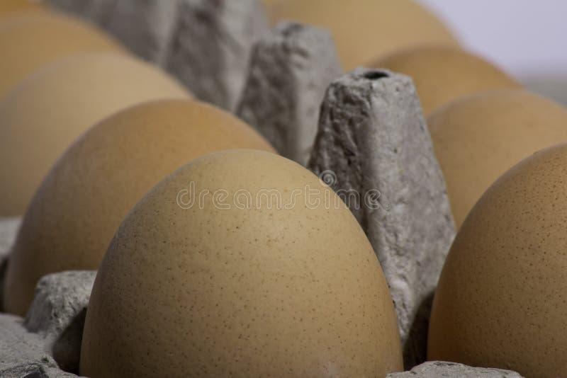 有机鸡蛋 免版税图库摄影