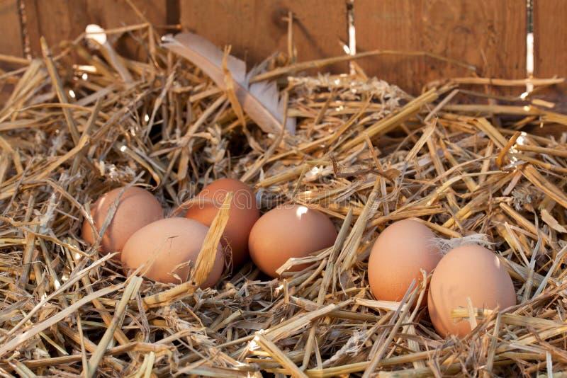 有机鸡蛋 免版税库存图片