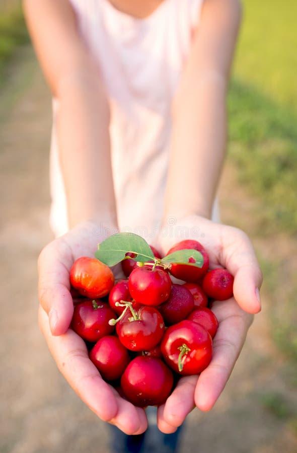 有机巴西金虎尾果子小樱桃在手中 免版税库存图片