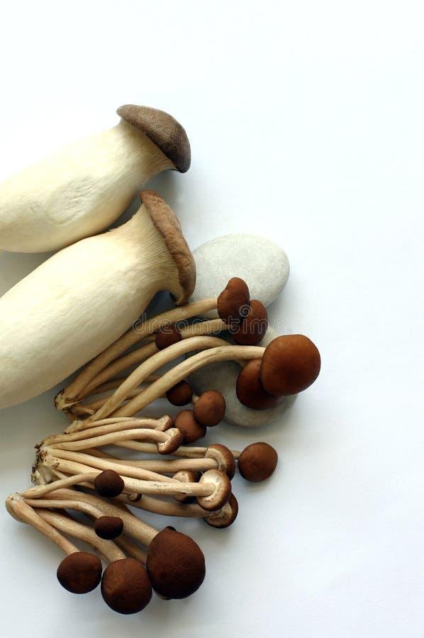 有机2个的蘑菇 免版税库存图片