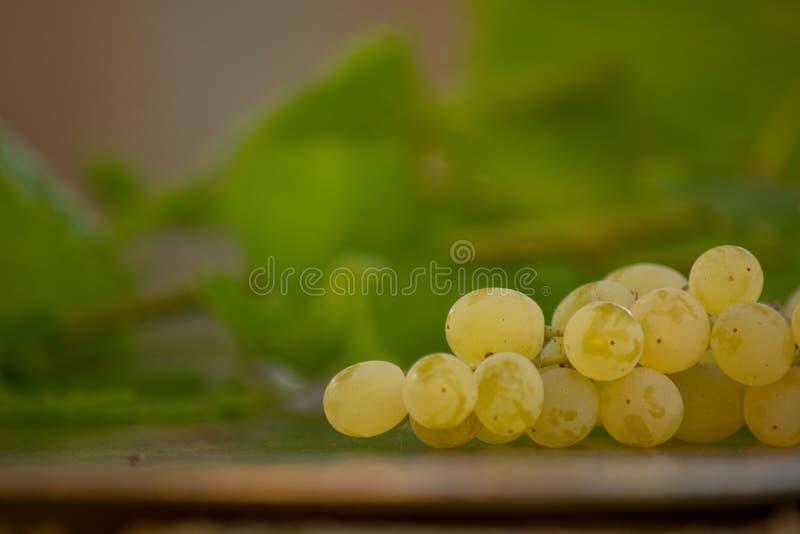 有机Chenin Blanc葡萄酒在加利福尼亚 库存照片