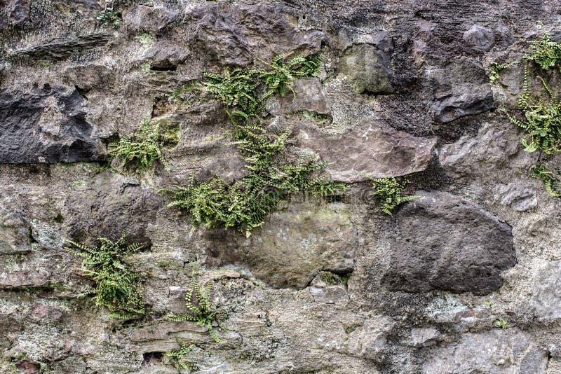 有杂草的古老石墙和蕨类 图库摄影