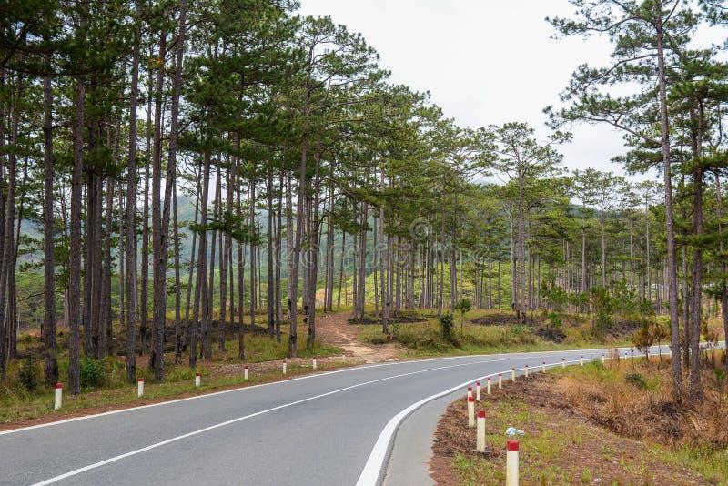 有杉树的路在山 免版税库存图片