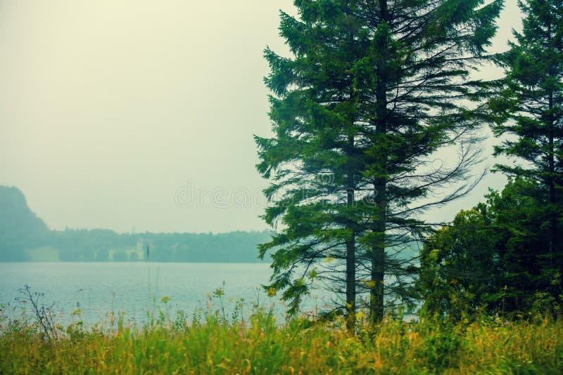 有松树的美丽的海湾 免版税图库摄影