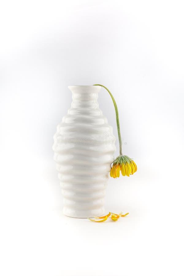 有枯萎的黄色花的花瓶 库存照片