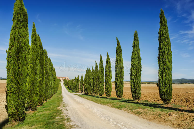 有柏树的托斯卡纳路,意大利 免版税库存照片