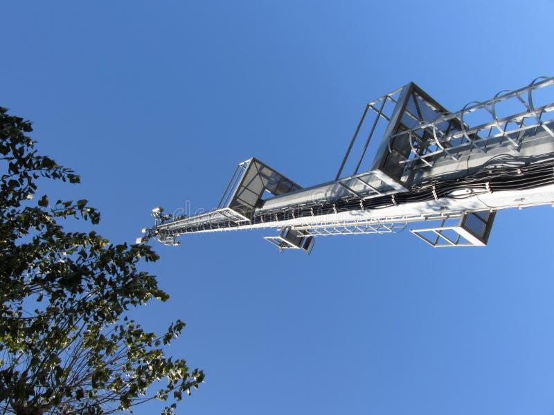 有树冠的电话天线反对天空蔚蓝 看法从右到左 免版税库存图片