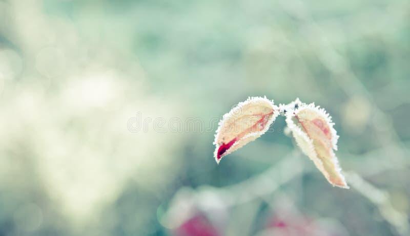 有树冰的两片微小的叶子 库存照片