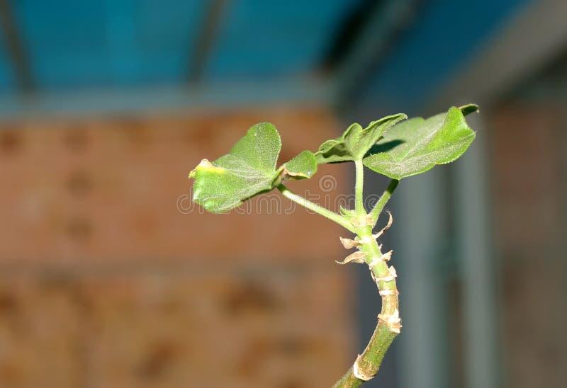有树叶子的一棵小植物 免版税库存照片