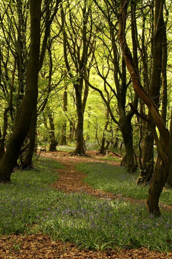 有树和会开蓝色钟形花的草的森林地道路 免版税库存图片