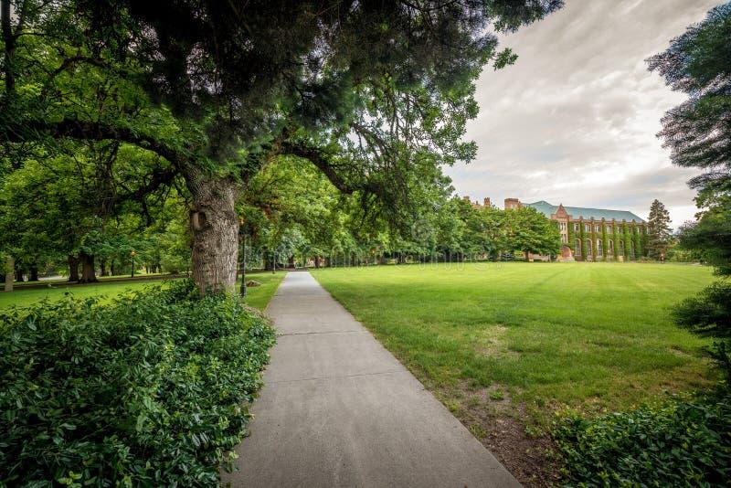 有树和大学政府大楼的美丽的公园 库存图片