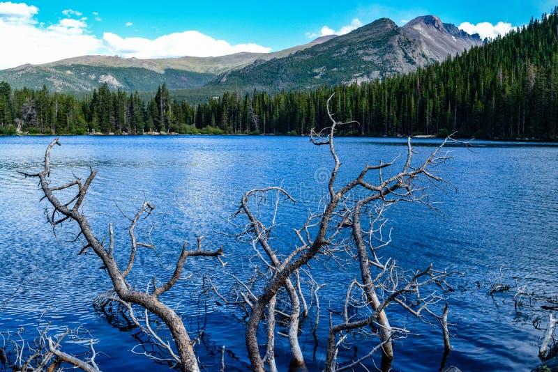 有树和山的蓝色湖 免版税图库摄影